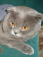 Плюшевый котик ищет девочку для вязки