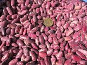 Фасоль узбекская красная