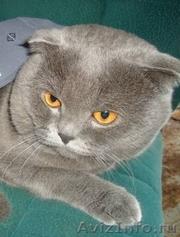 Котик ищет девочку для вязки