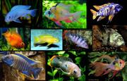 Аквариум Тюмень,  аквариумы на заказ Тюмень,  элитные аквариумы в Тюмени