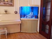 Изготовление аквариумов на заказ в Тюмени
